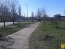 Всеукраїнська акція «Посади дерево миру»