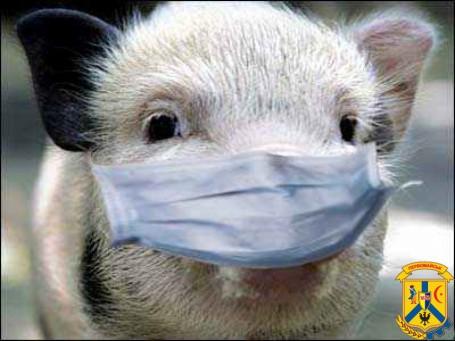 Розповсюдження африканської чуми свиней