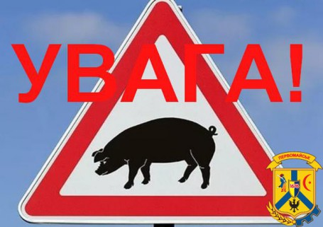 УВАГА! Африканська чума свиней.