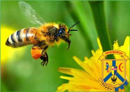 Алгоритм дій при отруєні бджіл.
